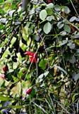 As flores vermelhas são bonitas Imagem de Stock