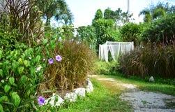 As flores violetas e brancas com campo de grama no jardim fotografia de stock royalty free