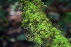 As florestas Foto de Stock Royalty Free