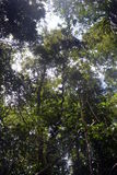 As florestas Foto de Stock