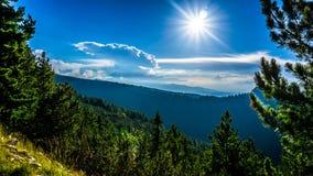 As florestas da montanha de Rila foto de stock