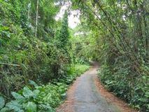 As florestas de bambu florescem no campo foto de stock