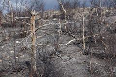 As florestas as mais northernmost em Europa são afetadas por fundições de ferro e de aço imagens de stock royalty free
