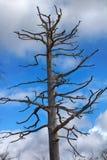 As florestas as mais northernmost em Europa são afetadas por fundições de ferro e de aço fotos de stock royalty free