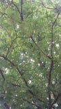 As folhas Fotografia de Stock