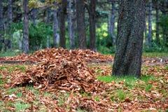 As folhas amarelas caídas no parque bonito da queda são recolhidas em uma pilha/pilha imagens de stock royalty free