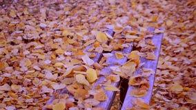 As folhas amarelas caem em um banco vídeos de arquivo