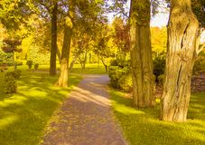 As folhas amarelas da floresta do parque do outono ajardinam, stairswalking, carvalho fotos de stock