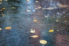 As folhas amarelas do outono na água, em uma poça, chuva, espirram e circundam na água fotografia de stock royalty free