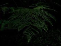 As folhas bonitas vêm das áreas tropicais da floresta fotos de stock