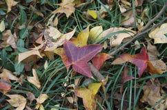As folhas caídas Imagem de Stock Royalty Free