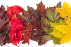 As folhas caídas de cores diferentes das árvores encontram-se nas fileiras Fotografia de Stock