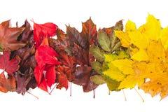 As folhas caídas de cores diferentes das árvores encontram-se nas fileiras Fotografia de Stock Royalty Free
