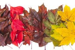 As folhas caídas de cores diferentes das árvores encontram-se nas fileiras Foto de Stock