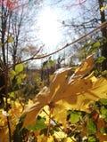 As folhas caídas em diversas cores decoram a paisagem da floresta fotos de stock