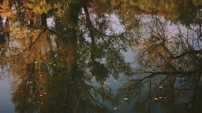 As folhas caídas flutuam nas árvores refletindo do rio do outono com folha amarela filme