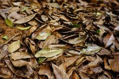 As folhas caídas imagens de stock