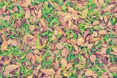 As folhas caem, outono na terra para a textura do fundo Imagens de Stock
