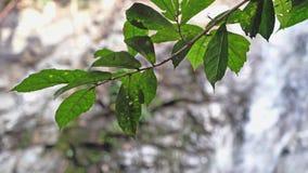 As folhas da árvore no primeiro plano e as mudanças focalizam à cachoeira tropical da selva no movimento lento da floresta profun vídeos de arquivo