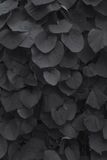 As folhas da bardana Foto de Stock Royalty Free