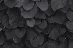 As folhas da bardana Fotos de Stock