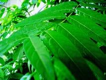 As folhas da natureza contrastam a textura alta fotos de stock royalty free