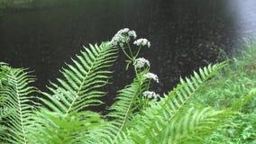 As folhas da planta da samambaia e as gotas borradas da chuva caem na água do lago da lagoa 4K vídeos de arquivo