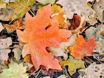 As folhas da queda de Autumn Maple e do carvalho fecham-se acima em Forest Floor em Rose Canyon Yellow Fork e na fuga grande da r Fotos de Stock Royalty Free