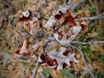 As folhas da queda de Autumn Maple e do carvalho fecham-se acima na floresta em Rose Canyon Yellow Fork Trail em montanhas de Oqu Imagens de Stock