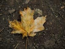 As folhas da queda de Autumn Maple e do carvalho fecham-se acima na floresta em Rose Canyon Yellow Fork Trail em montanhas de Oqu Fotos de Stock Royalty Free