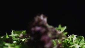 As folhas da salada caem para baixo no movimento lento video estoque
