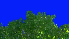 As folhas da vinha estão balançando ao vento video estoque