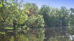 As folhas das árvores caem lentamente na água, parque com o rio, paisagem do outono em um dia ensolarado filme