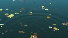 As folhas de Autmn estão flutuando abaixo da água video estoque