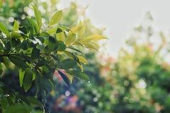 As folhas de Bokeh estão molhadas após a chuva fotografia de stock royalty free