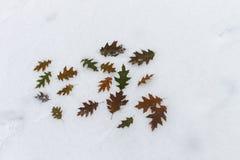 As folhas de bordo do inverno da inscrição na neve Foto de Stock Royalty Free
