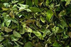 As folhas de chá são secadas em um fundo da fábrica do chá imagens de stock