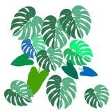 As folhas de Monstera e a mão do vetor do filodendron tiram o verão exótico ajustado com folhas verdes fotografia de stock