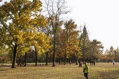 As folhas de outono Imagens de Stock