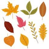 As folhas de outono ajustaram-se, isolado no fundo branco ilustração royalty free