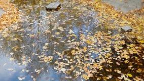 As folhas de outono amarelas encontram-se na superfície da lagoa vídeos de arquivo