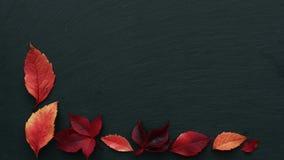 As folhas de outono amarelas vermelhas fazem o quadro no fundo escuro com espaço para o texto, param a animação do movimento, for filme