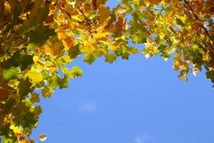 As folhas de outono contra o céu azul Foto de Stock Royalty Free