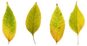 As folhas de outono das árvores amarelam, bronzeiam, vermelho e verde Fotos de Stock Royalty Free
