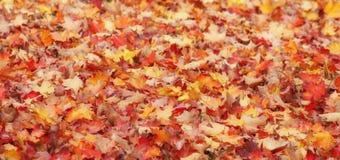 As folhas de outono do vermelho alaranjado e do amarelo ou aquecem cores da queda imagem de stock royalty free