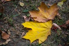 As folhas de outono encontram-se na terra no parque da cidade Fotografia de Stock