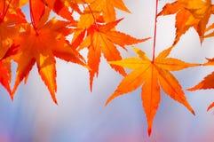 As folhas de outono fecham-se acima Fotos de Stock Royalty Free