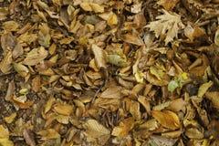 As folhas de outono horizontais fecham-se acima Fotos de Stock Royalty Free