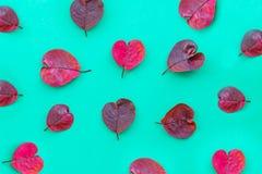 As folhas de outono roxas coração-deram forma ao teste padrão no papel de turquesa, fundo abstrato do outono, imagem de stock