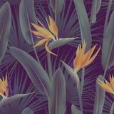 As folhas de palmeira e o Strelitzia Reginae florescem sabido como a flor do guindaste, ilustração do vetor